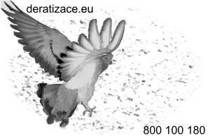 instalace hrotoů proti holubům