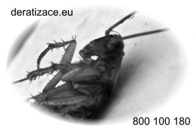 hubení švávů